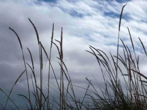 grass + sky